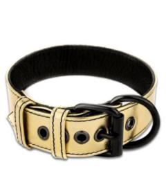 Bondage Fetish Collar & Leash Gold
